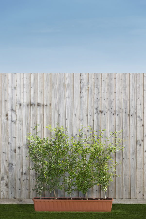 Mixed native hedging Trough Mix 2