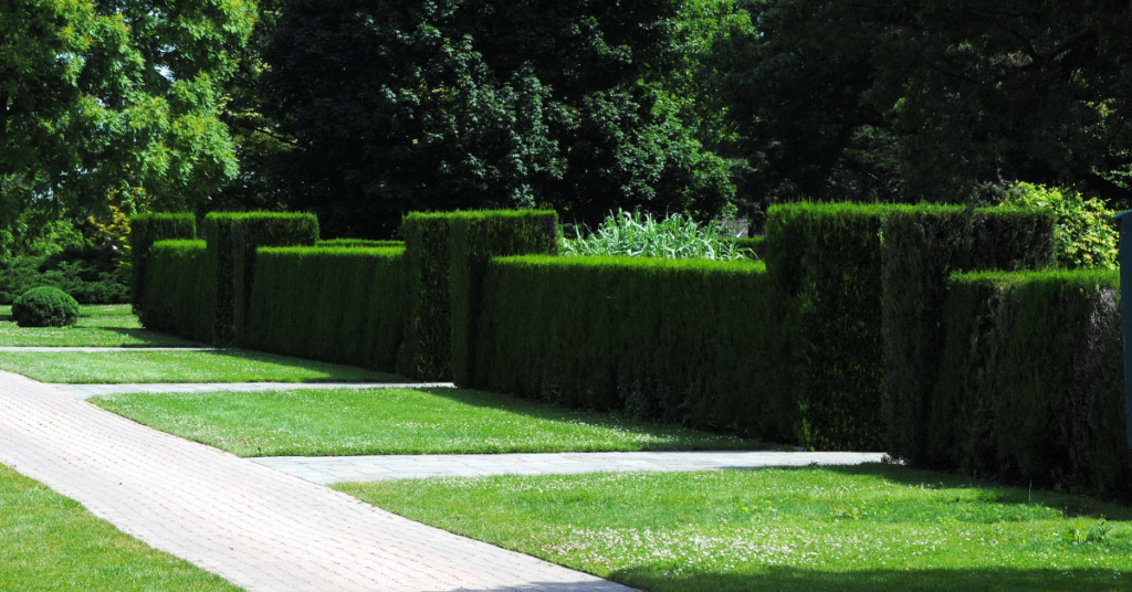 hedges in straight lines