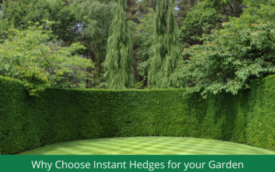 Why Choose Instant Hedging for your Garden?
