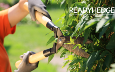 5 Important Tips for Trimming Hedges