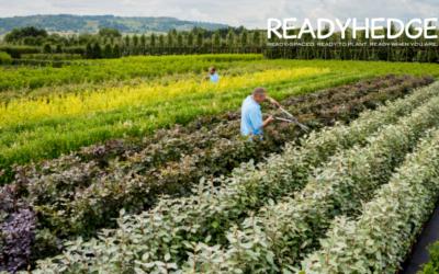 Top 5 Gardening Jobs for June
