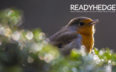 The Benefits of Hedges for Wildlife